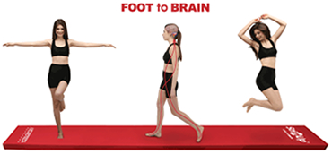 FOOT to BRAIN
